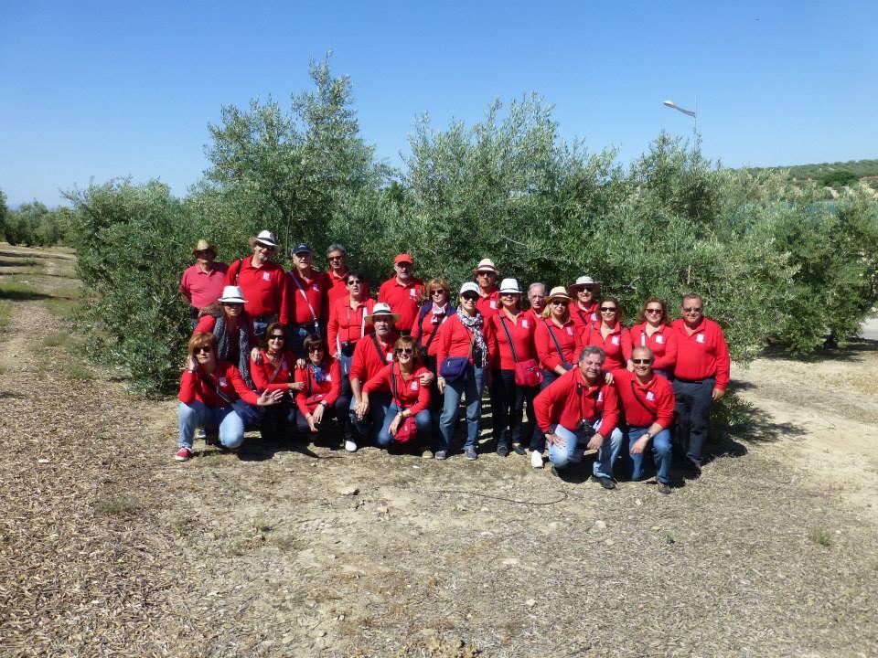 El oleoturismo, el nuevo turismo en Jaén